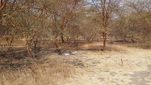 ostrich at bandia reserve senegal