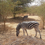 Things to do in Senegal:  Bandia Reserve