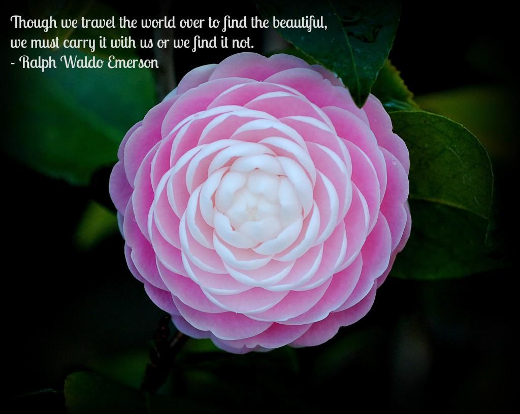 travel quote jan 2015